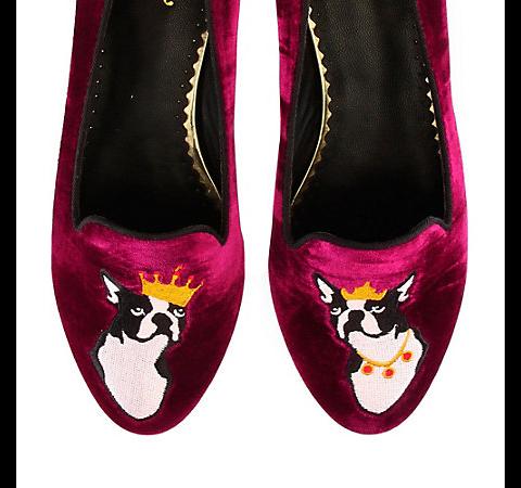 royal terrier slippers